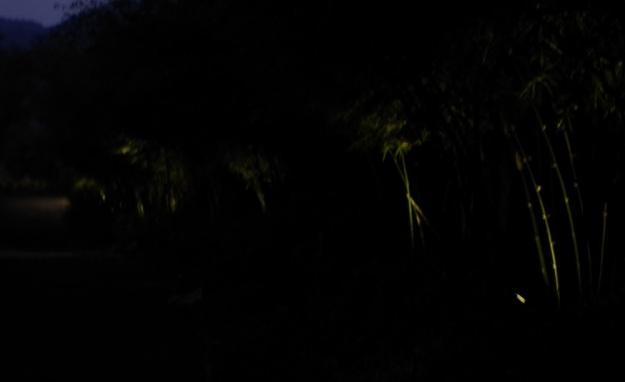 lampu13