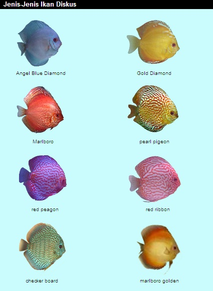 jenis - jenis ikan hias3