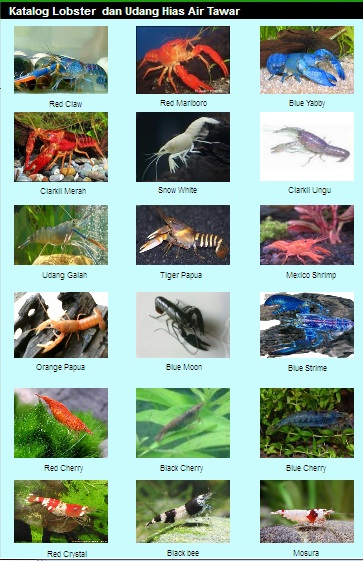 jenis - jenis ikan hias9