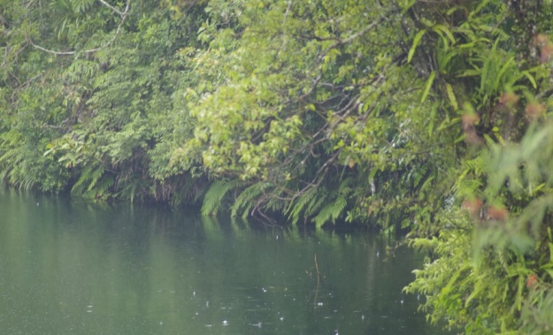 di danau ranamese5