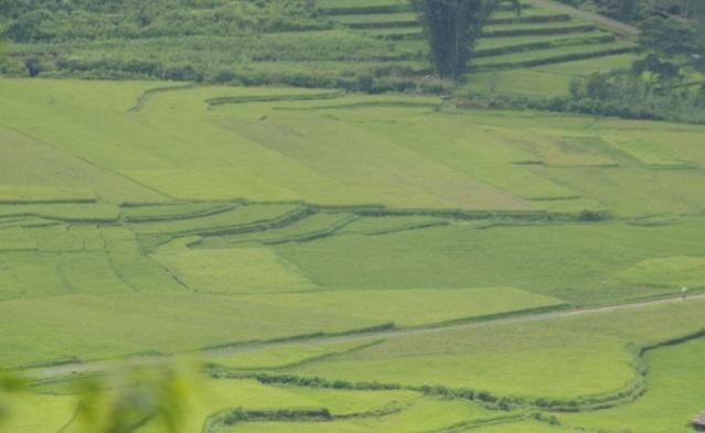 panrama manggarai 4