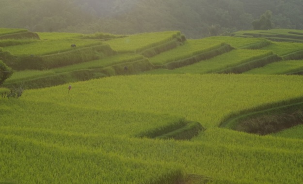 sawah di Kab Manggarai 1