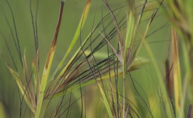 daun rumput by vera1