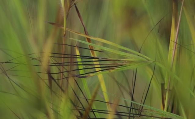 daun rumput by vera2