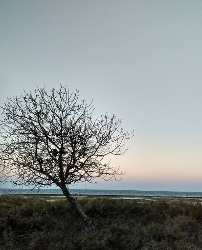 lonely tree 1