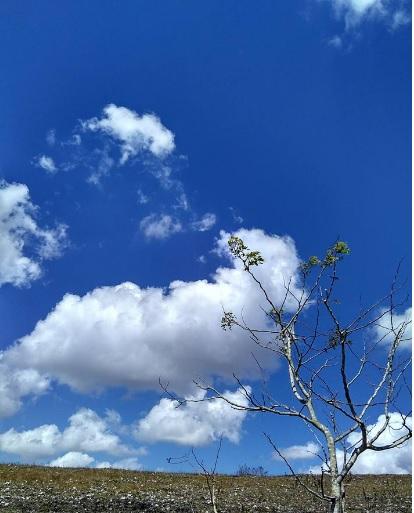 lonely tree10