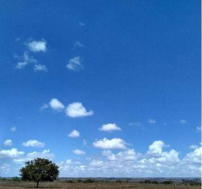 lonely tree13