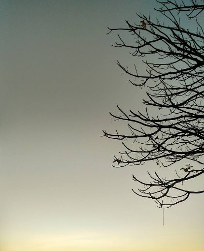 lonely tree2