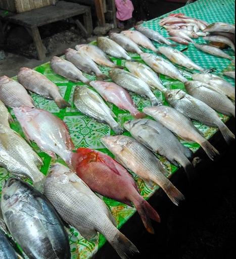 pedagang ikan5