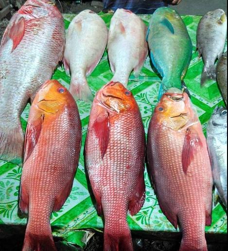 pedagang ikan6