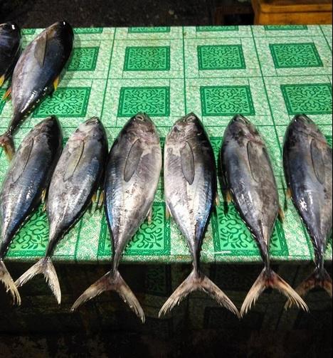 pedagang ikan8
