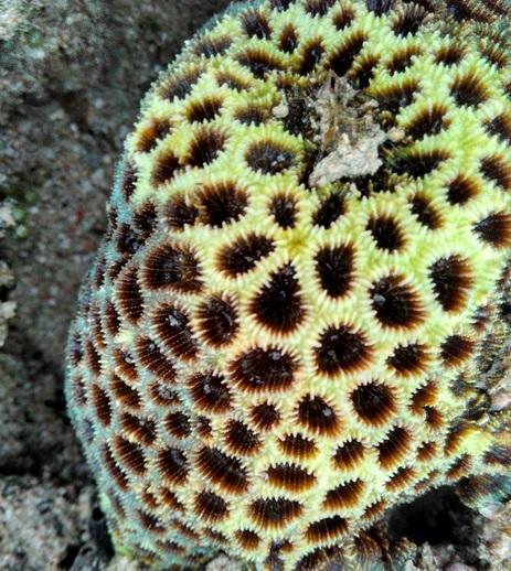 terumbu karang1