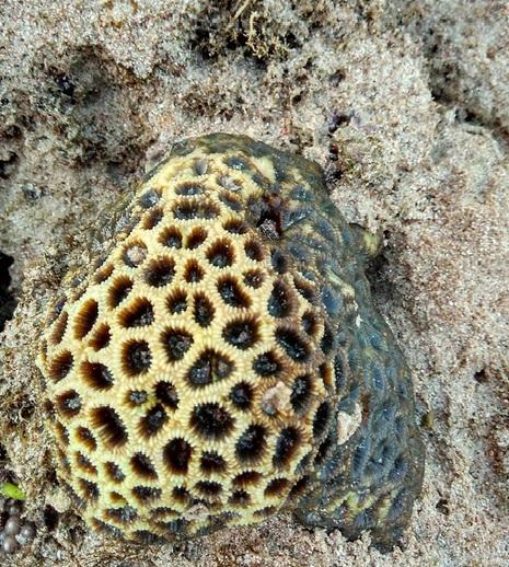 terumbu karang5