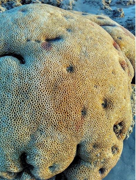 terumbu karang6