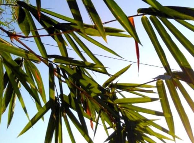 7 Berteduh dibawah pohon bamboo