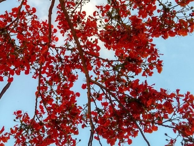 Sepe Bunga Desember2