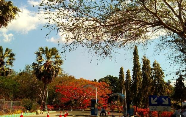 Kupang bulan Desember9
