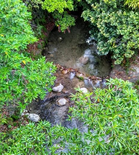 hijau tandanya ada air17