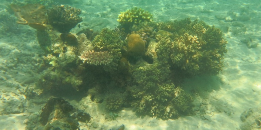 bawah laut kupang barat1