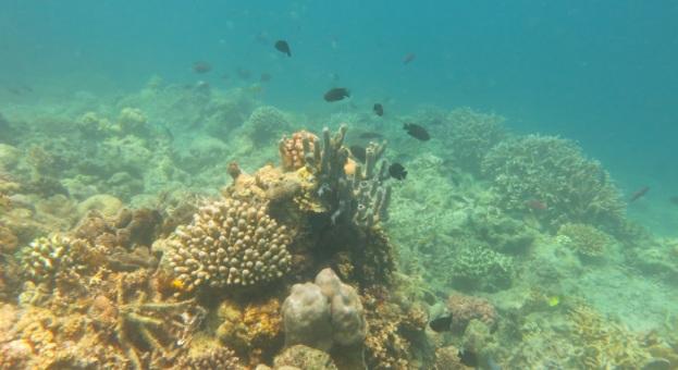 bawah laut kupang barat11