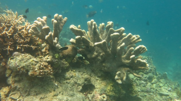 bawah laut kupang barat12