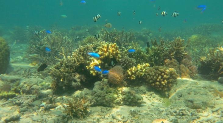 bawah laut kupang barat15