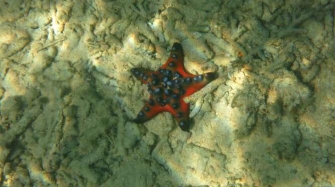 bawah laut kupang barat17