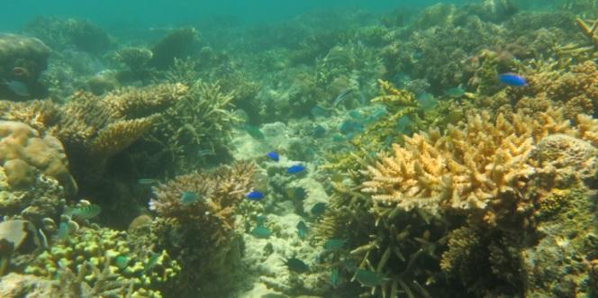 bawah laut kupang barat2