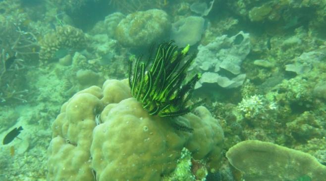 bawah laut kupang barat21