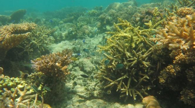 bawah laut kupang barat3