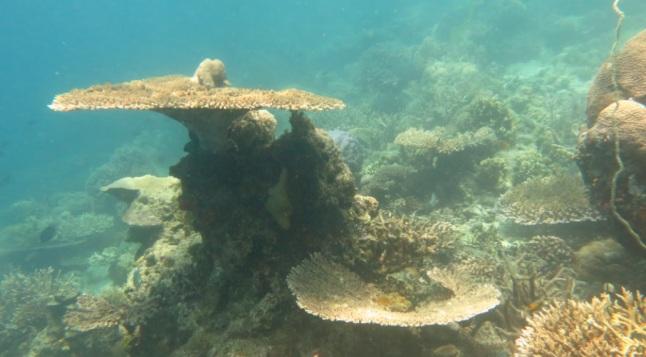 bawah laut kupang barat4