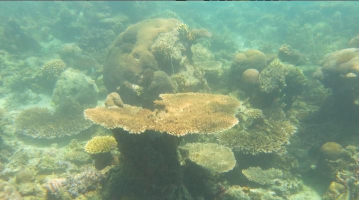bawah laut kupang barat5