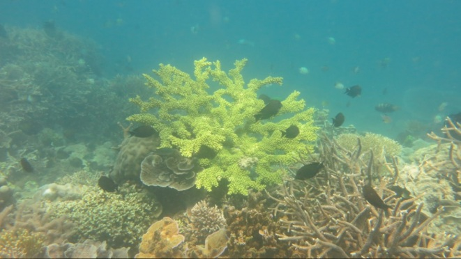 bawah laut kupang barat6