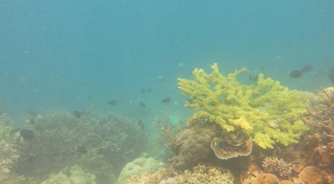 bawah laut kupang barat7