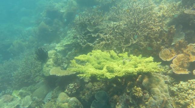 bawah laut kupang barat8