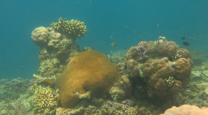 bawah laut kupang barat9
