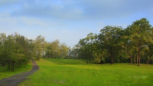 hutan Ampupu1