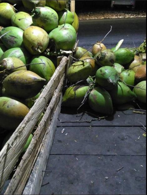 jagung bakar kelapa muda2