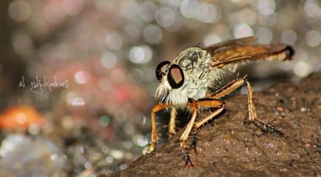 seekor lalat