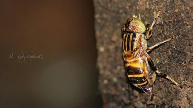 seekor lebah