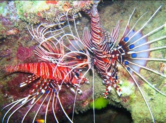 under water3