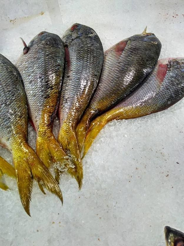 ikan-segar-4