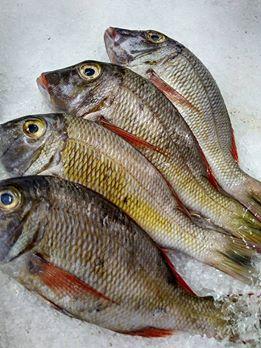 ikan-segar1