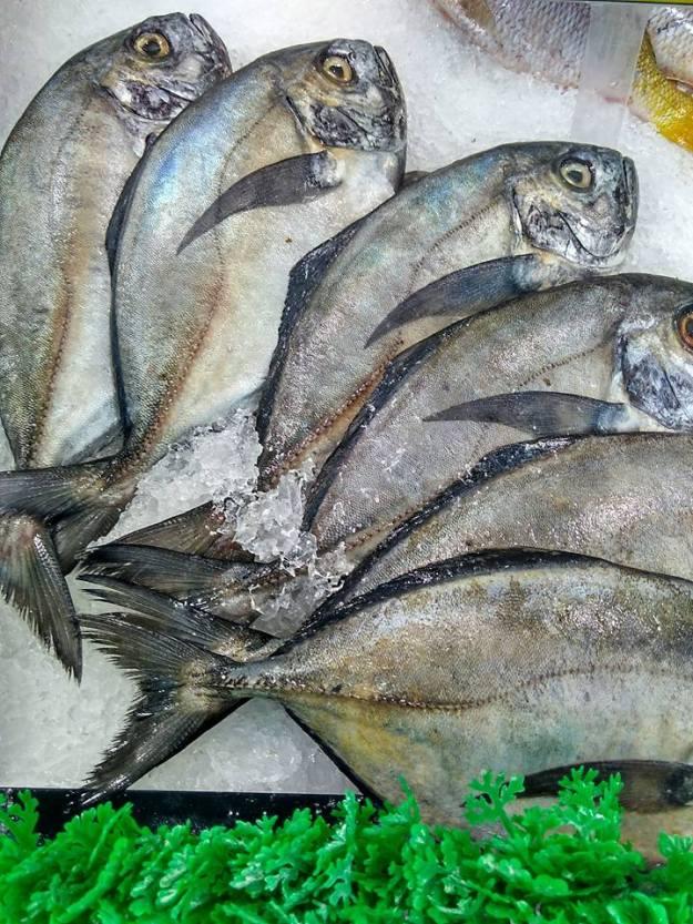 ikan-segar5
