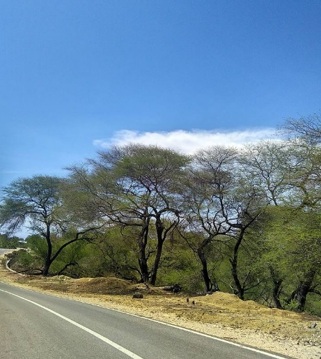 tumbuhan-pulau-timor2