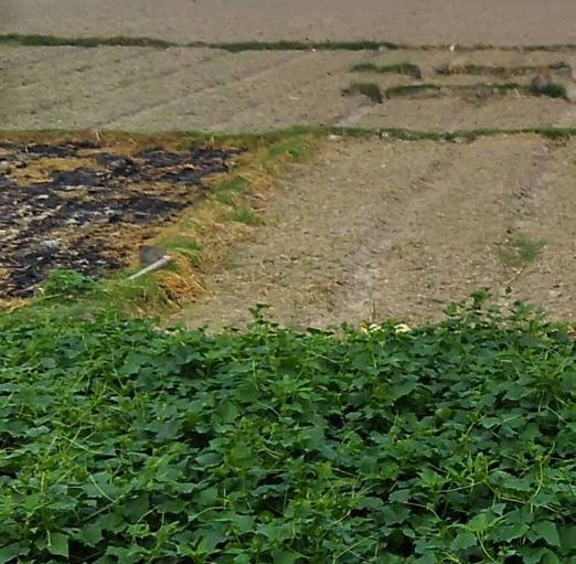 rumputku-hijau3