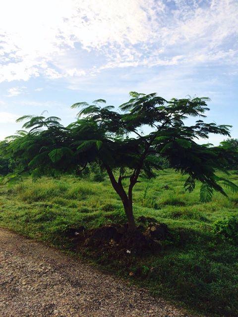 pohon-rindang