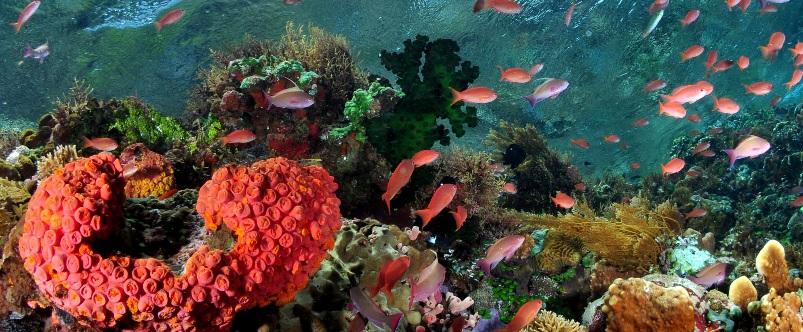 Alami Alor Dive Resort2