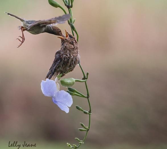 galerry burung 1