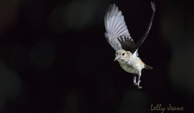 galerry burung 2